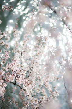 #blossom