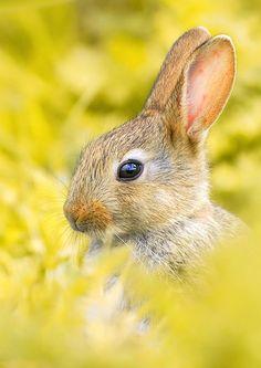 Bunny + yellow. #WesternUnion