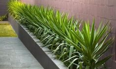 Easy Desert Landscaping Tips That Will Help You Design A Beautiful Yard Low Maintenance Landscaping, Low Maintenance Garden, Country Landscaping, Backyard Fences, Modern Landscaping, Front Yard Landscaping, Yucca Elephantipes, Modern Landscape Design, Cool Landscapes