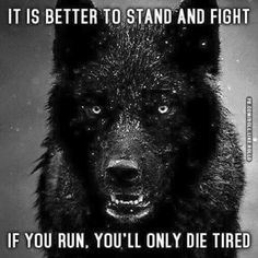 Famous and Top Wolves Quotes and The best Wolf Sayings and Quotes Image Collection. Wisdom Quotes, True Quotes, Great Quotes, Quotes To Live By, Motivational Quotes, Inspirational Quotes, Super Quotes, Lone Wolf Quotes, Wolf Qoutes