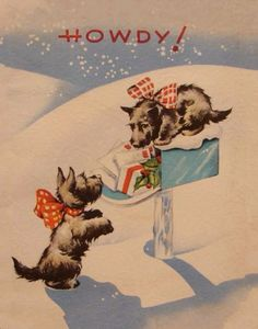 Christmas Scotties are into everything.