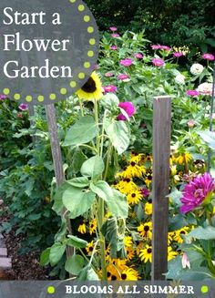 Best flowers for cutting!  Colorful, easy-to-grow, flower garden that blooms all summer long!