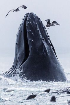 Whale greeting.