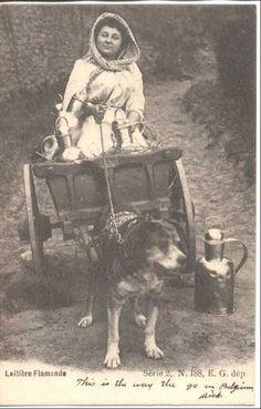 FC802 Belgium 1900 s Dog Drawn Cart Milk Maid Milk Jugs