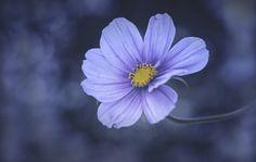 Flower... by Almqvist Photo on 500px