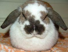 File:Knabbel looks like an easter egg.jpg
