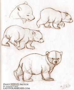 Risultato della ricerca immagini di Google per http://www.lastpolarbears.com/wp-content/uploads/2010/09/Daily_Animal_Sketch_047.jpg