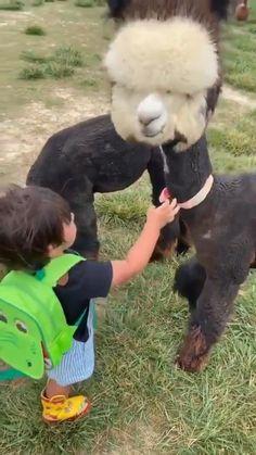 Cute Animal Photos, Cute Animal Videos, Funny Animal Pictures, Cute Videos, Cute Little Animals, Cute Funny Animals, Funny Cute, Cute Creatures, Animal Memes
