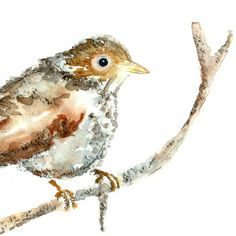 Thrush. Reminds me of Grandma Rogers on the 4th of July.
