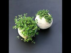How to make really cool round ball shaped planters with cement. Mold the cement around a balloon to get the round shape. This detailed tutorial for making a DIY cement balloon planter is actually easy and so much fun! Diy Concrete Planters, Concrete Cement, Concrete Garden, Diy Planters, Garden Planters, Cement Pots, Concrete Crafts, Concrete Projects, Garden Projects