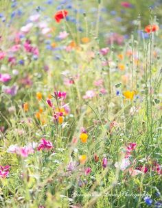 Bees love wild flowers in the meadow. It is a symphony of resonating joy for bees.