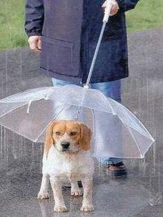 Paraguas para perros - WATYFA
