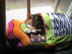 sleeping-kitties-46__605