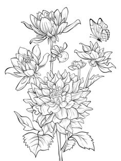 Illustration of Vector dahlia flower isolated on white background with butterfly. Element for design. Hand-drawn contour lines and strokes. vector art, clipart and stock vectors. Flower Line Drawings, Simple Line Drawings, Butterfly Drawing, Floral Drawing, Cute Coloring Pages, Flower Coloring Pages, Coloring Books, Dahlia Flower, Flower Art