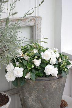 Flowers in a Zinc bucket