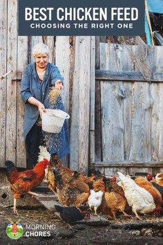 Not sure which chicken feed brand you should choose? Read this recommendation to find out what is the best chicken feed for laying hens. Best Egg Laying Chickens, Raising Backyard Chickens, Laying Hens, Keeping Chickens, What To Feed Chickens, Chicken Life, Chicken Eggs, Farm Chicken, Chicken Houses