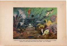 c. 1934 SUBMARINE FANTASY print - vintage marine life print - ocean print - sea life print - lithograph marine life - fish octopus mermaids by antiqueprintstore on Etsy