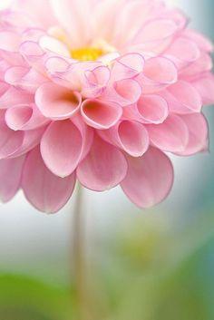 #primavera #immagini e #aforismi   QUI>>http://tormenti.altervista.org/primavera-17d/