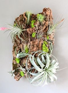 5 Ways to Display Your Air Plants
