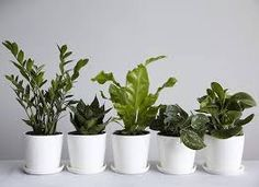 Image result for plants in the office