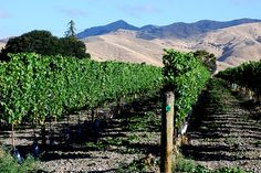 How to work New Zealand's wineries