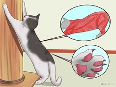 How to Stop a Cat from Clawing Furniture via wikiHow.com