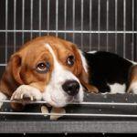 Benchtraining: Puppy in de Bench