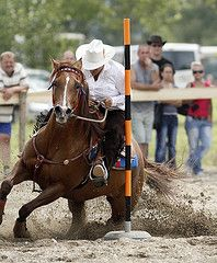 Horse & rider have to work a bunch to be good at Pole Bending. Most Beautiful Animals, Beautiful Horses, Beautiful Creatures, Barrel Racing Horses, Barrel Horse, Horse Saddles, Horse Halters, Western Saddles, Westerns