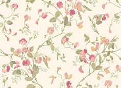 Sweet Pea  Pink wallpaper by Cole & Son
