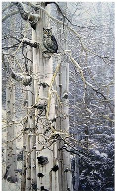 """Sentinel of the Grove"" by Stephen Lyman [American wildlife painter, oil on canvas"".Owl roosting in the branches"" Beautiful Birds, Beautiful World, Animals Beautiful, Beautiful Pictures, Simply Beautiful, White Birch Trees, All Nature, Tier Fotos, Mundo Animal"