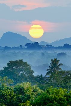 Sri Lanka sunrise over jungle