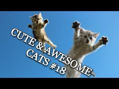 CUTE & AWESOME CATS #18