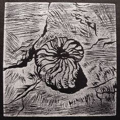 Words on Woodcuts: Search results for ammonite fossil