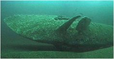 'The most intact U-boat wreck I've ever seen' U-Boat Hunter Dr Innes McCartney – The Discovery of U778