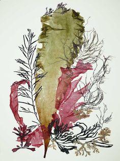 Seaweed Art Pressed seaweeds Sea weed Pressings Natural Kelp Seaweed Artwork Beach cottage decor Alganet Original algae Collage 22x29