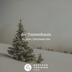 """Aufgabe 473  """"Hast du schon den schönen Tannenbaum gesehen, _____ vor Müllers Haus steht?  a) der b) den c) dem  #Relativsatz #learngerman #deutschlernen"""