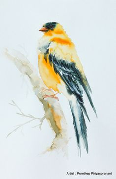 Goldfinch , Bird watercolor painting, Bird art, Art print size 8X10 inch for room décor & valuable gifts