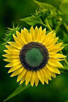 Sunflower- In Loving Memory of my Beautiful Cousin Cheyenne!