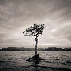 https://flic.kr/p/ZzHBfE | Lone Tree, Mallarochy Bay | Hasselblad 500cm 40mm F/4 FLE Fuji Acros 100 Xtol 1:1