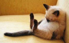 And Stretch !! - 30th December 2015 - We Love Cats and Kittens