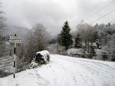 Eștigata pentru o vânătoare de trufe prin pădurile înzăpezite din Munții Buzăului? Ei bine, ai ajuns în locul potrivit. Cazează-te viner... Snow, Outdoor, Outdoors, Outdoor Games, The Great Outdoors, Eyes, Let It Snow