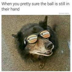Funniest Animals of the Day that will Make You LOL - 20