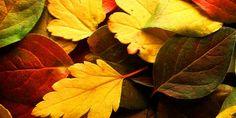 Autumn Day by AdonisWerther.deviantart.com