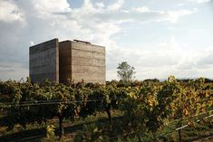 CCA grows a winery from the soil - designboom | architecture & design magazine