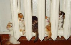 Sıcağı Seven Hayvanlar