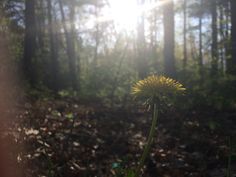 Dandelions and suns Perfect Combo
