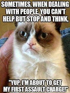 Humor sarcasm ...For more grumpy cat quotes and sarcasm quotes visit www.bestfunnyjokes4u.com/rofl-funny-pic-of-the-day-8/