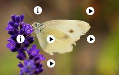 de vlinder by Juf Liesbet