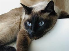 Кошка и человек - истории, легенды и поверья о кошках