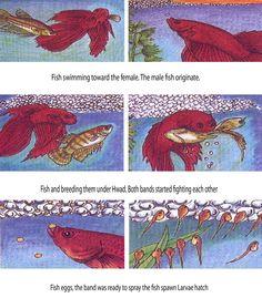 Betta Fish Types, Betta Fish Care, Fish Tank Terrarium, Water Terrarium, Fish Tank For Kids, Breeding Betta Fish, Fish Gallery, Class Pet, Fish Bites